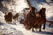 Private Horse Sleigh Ride in the Polish Countryside